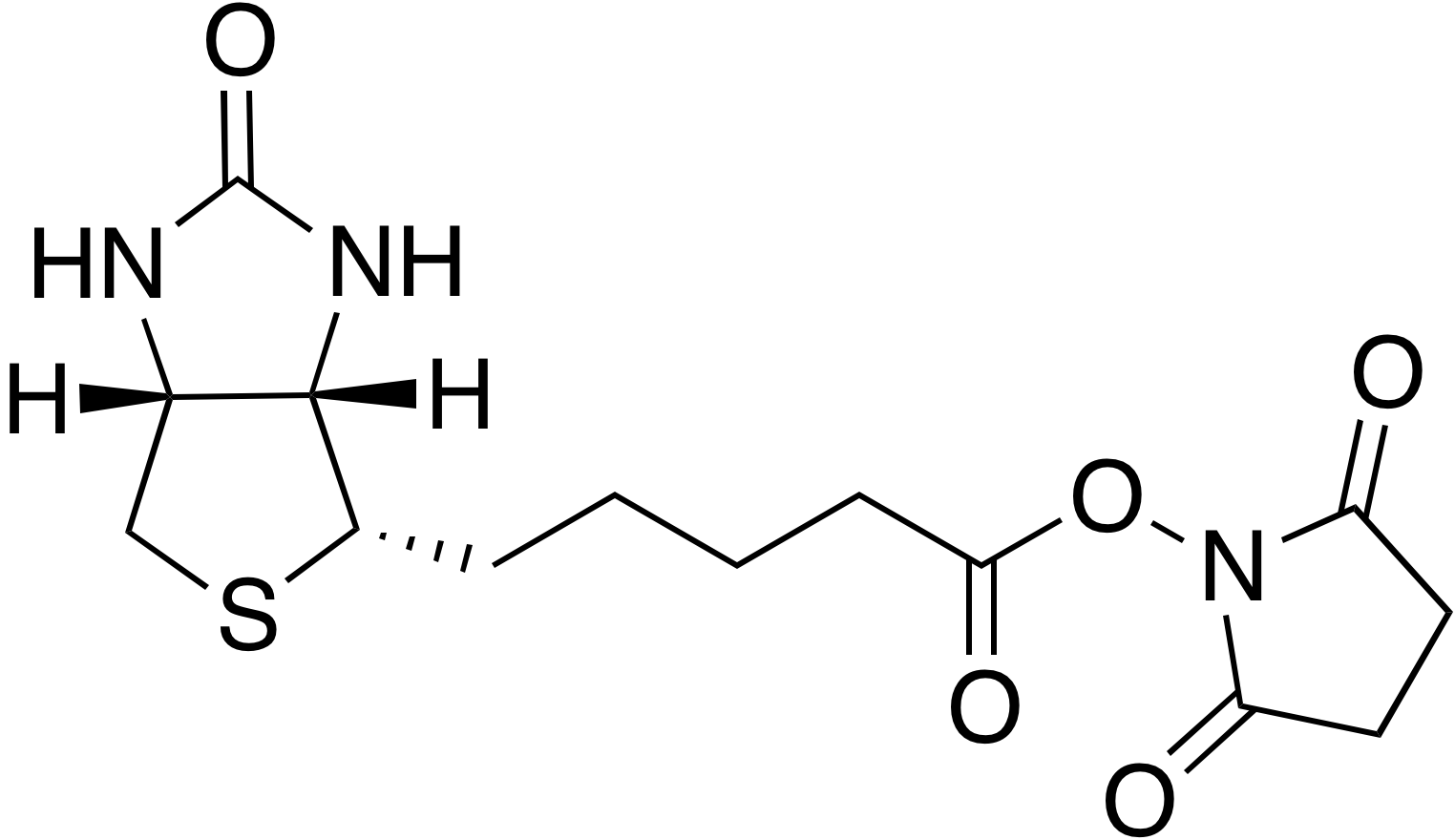 (+)-Biotin N-hydroxysuccinimide ester
